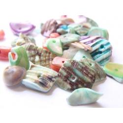 mušle, mix velikosti a barev